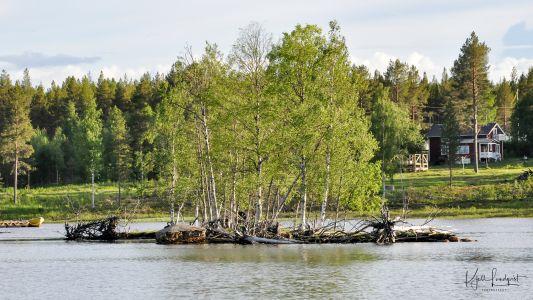Furuögrund 2017-06-20